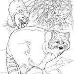 dibujo mapache 3